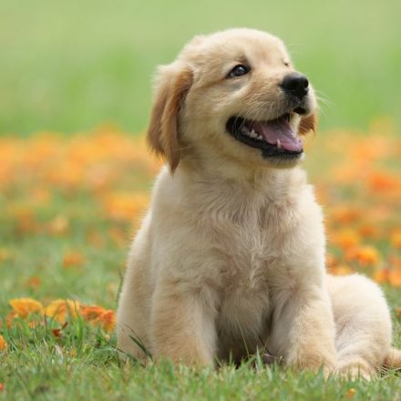 Cutest Dog Breeds to Own